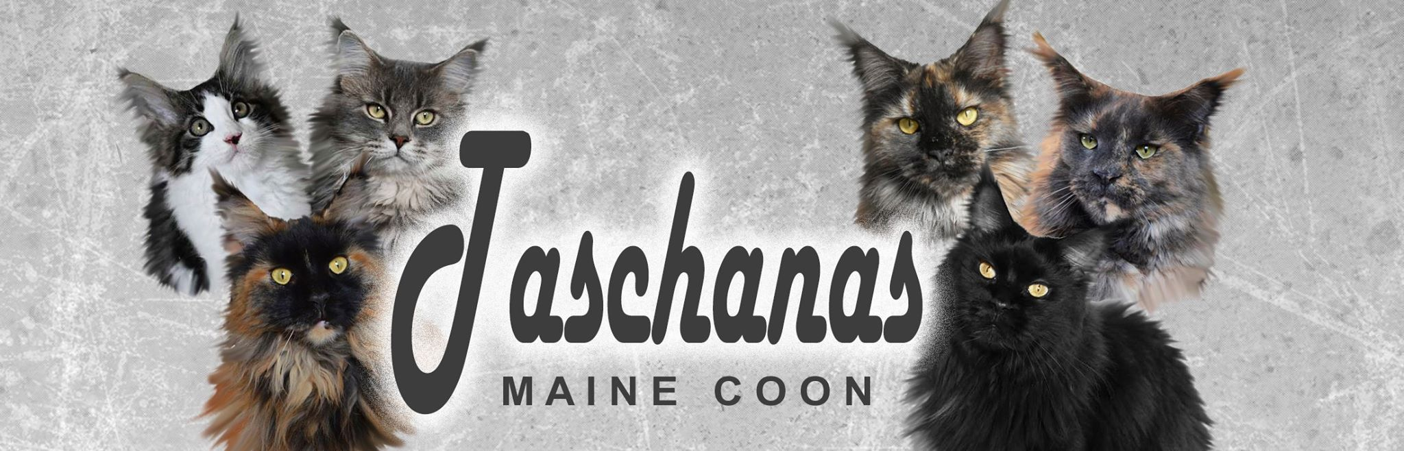 Taschanas Maine Coon
